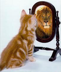 LEU vs pisica